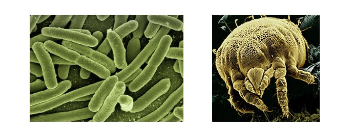 acarien-et-bacteries-oreiller-jauni