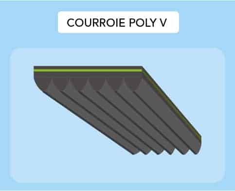 Courroie Poly V
