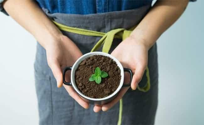 cultiver ses propres pnates